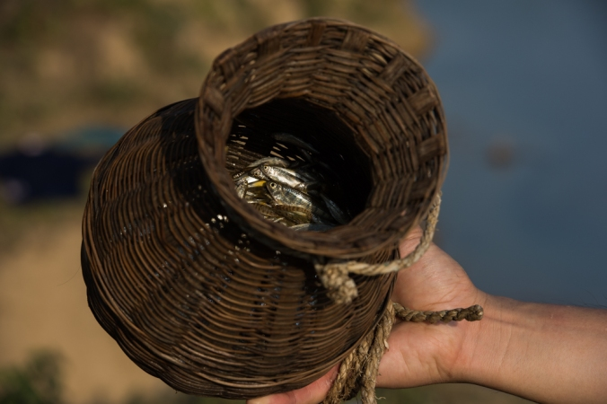 fish-in-basket