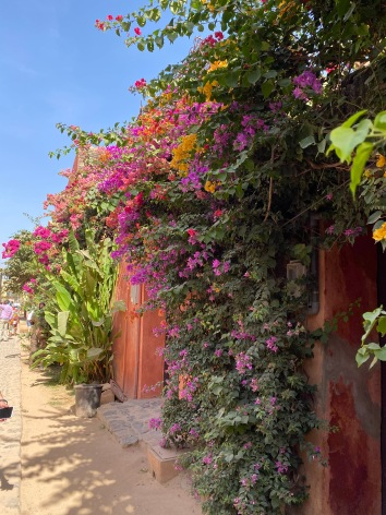 Flowers on Goree
